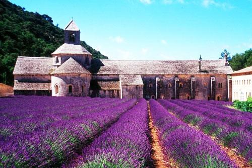[新聞] 紫色法國蜜月旅行 浪漫的大河之旅