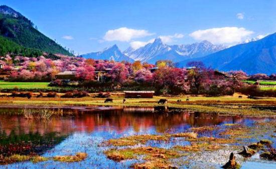 [新聞]  尋訪最美春天 2015林芝桃文化旅遊節即將開幕