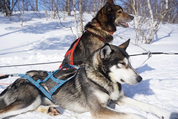 就是那道光!北極圈雪橇犬體驗、Abisko 極光小爆發與臥鋪列車!