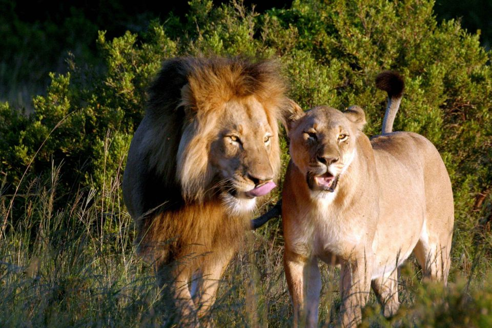 此生必去清單之一!精選非洲6大「獵遊勝地」,親眼見證動物大遷徙,實現對非洲冒險的渴望