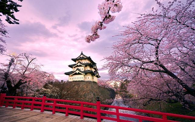 東京,櫻花圍繞的動漫之都