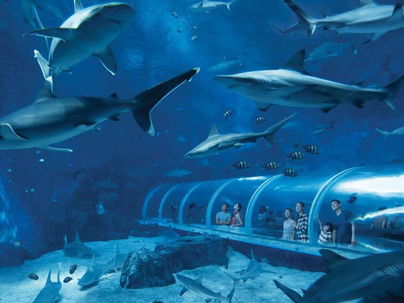 新加坡~S.E.A.海洋館(新加坡聖淘沙名勝世界)