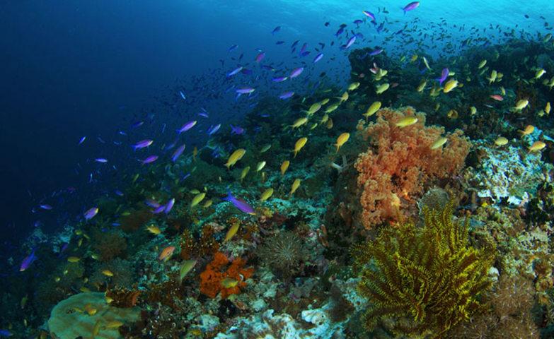 此生有機會一定要來看看這瑰麗色彩的珊瑚群,佩斯卡多爾島