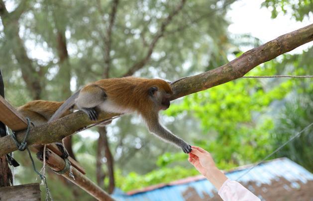 世界最小的國家公園,猴子橫行,紙老虎稱霸