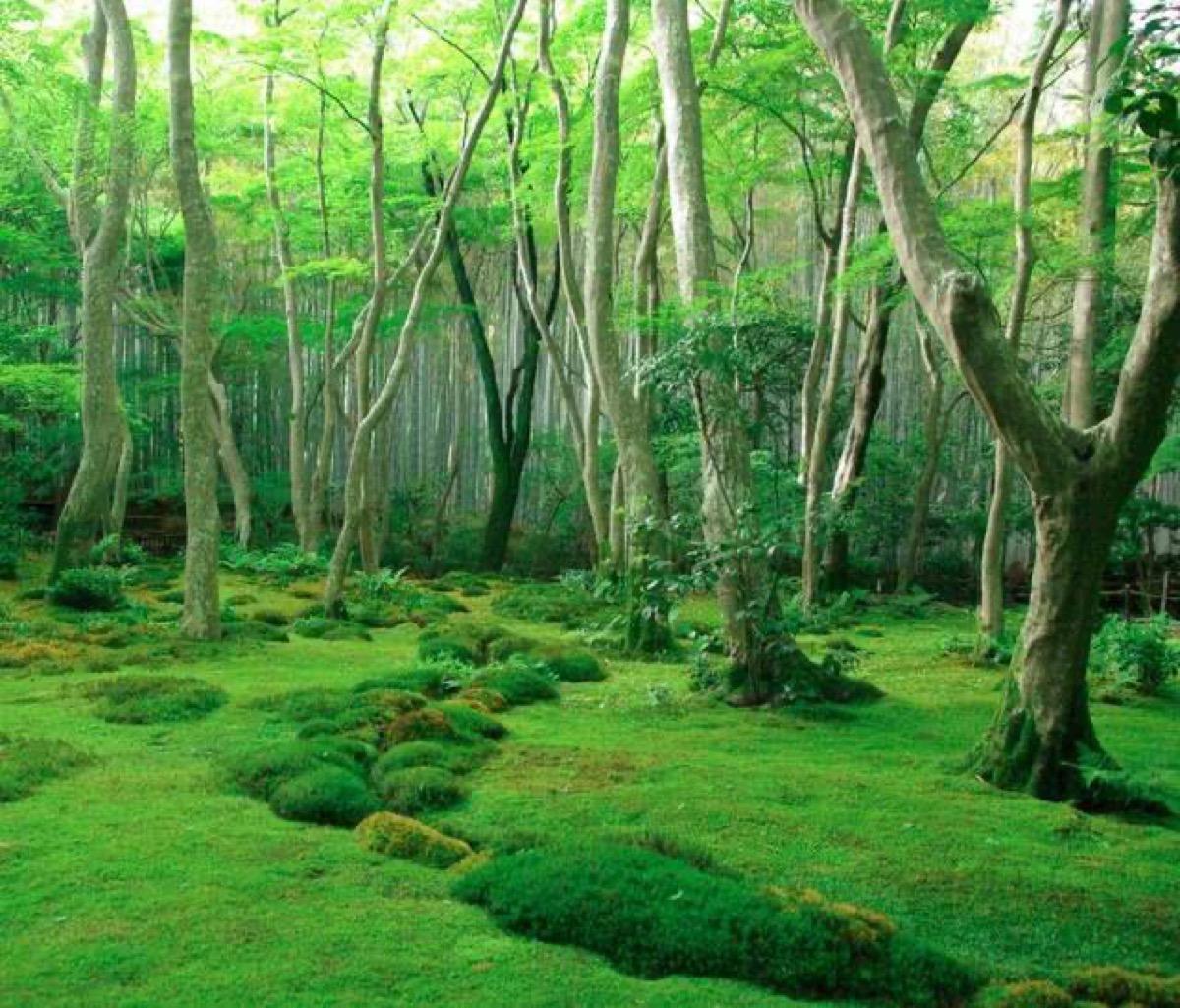 日本最「講究」古寺,預約還要親自寫信,參拜費高達三千日元